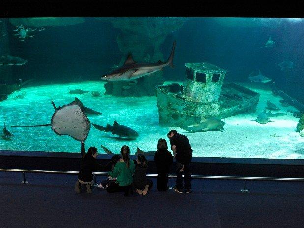 villa-bettina-la-baule-ussim-vacances-ocearium-croisic-poissons-requins-bateau