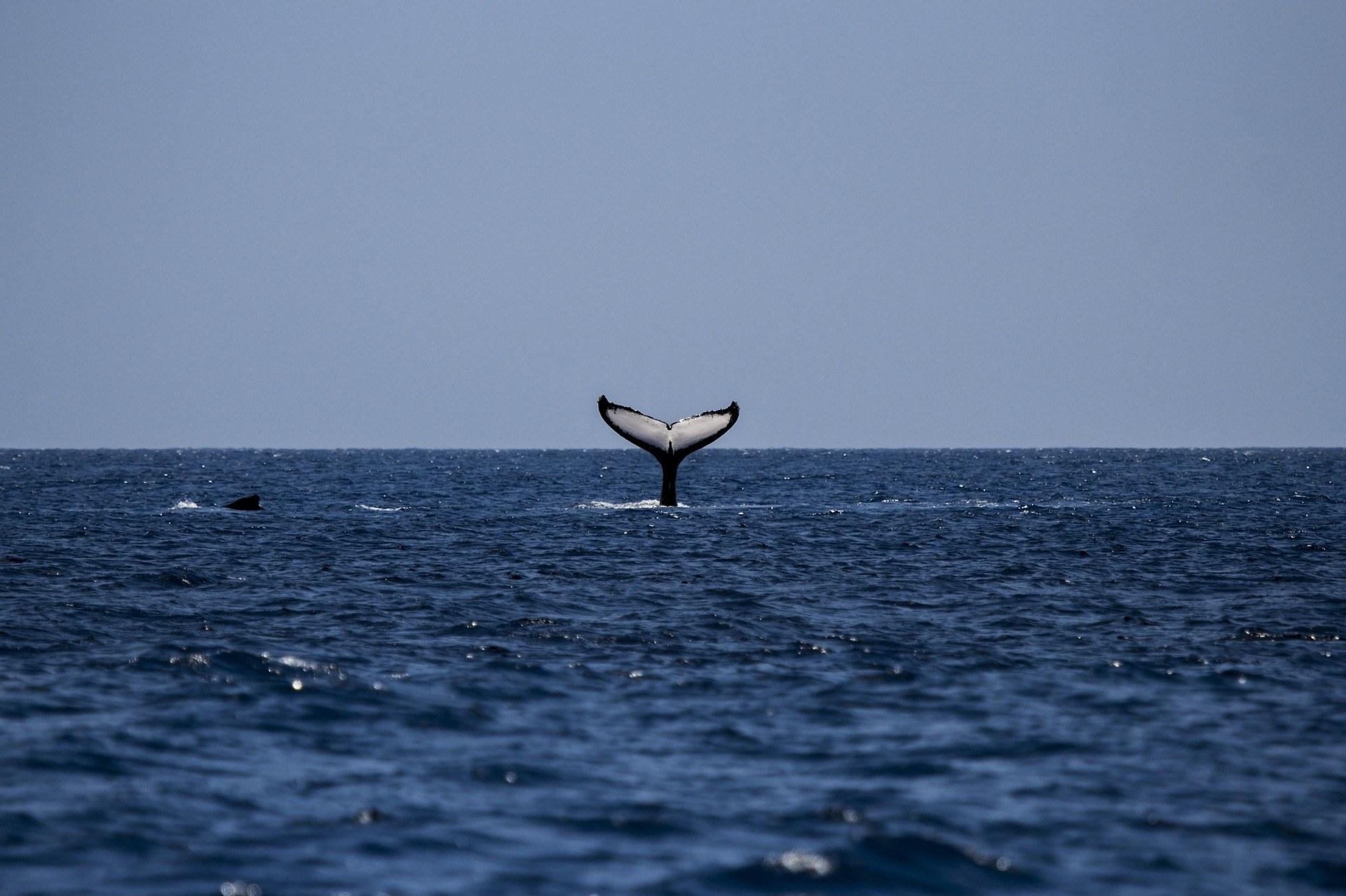 croisière-baleines