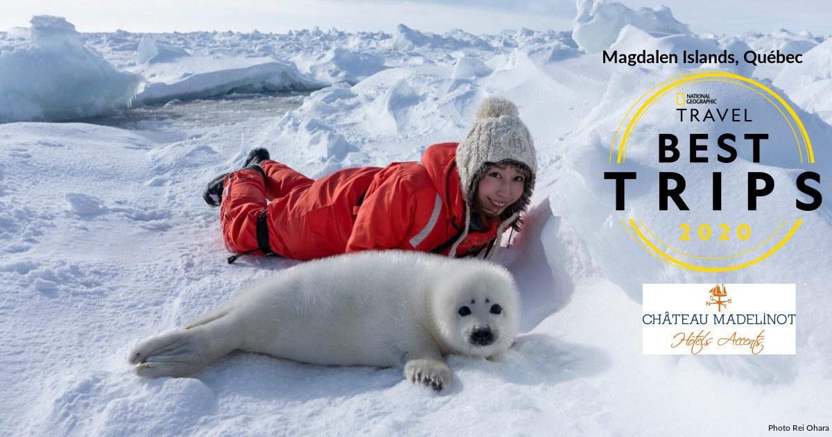 hotels-accents-best-trips-nat-geo-harp-seals