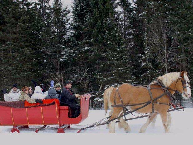 traineaux chevaux