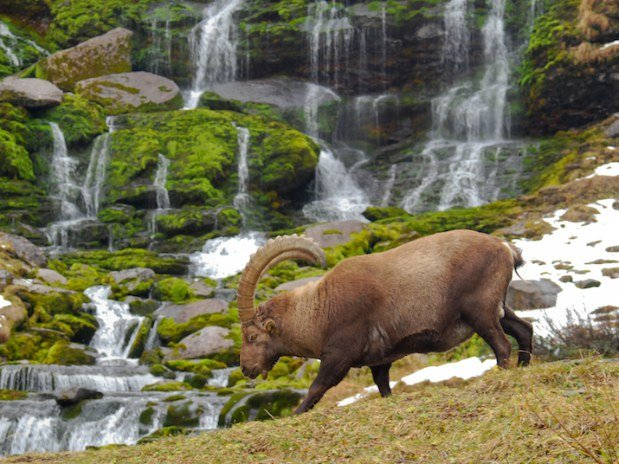 Séjour liberté avec les ânes - Altipik
