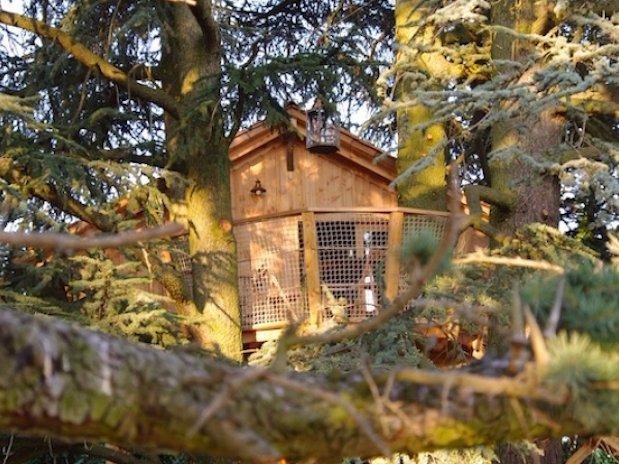 Cabane sur les arbres domaine des grands cèdres Château Loire