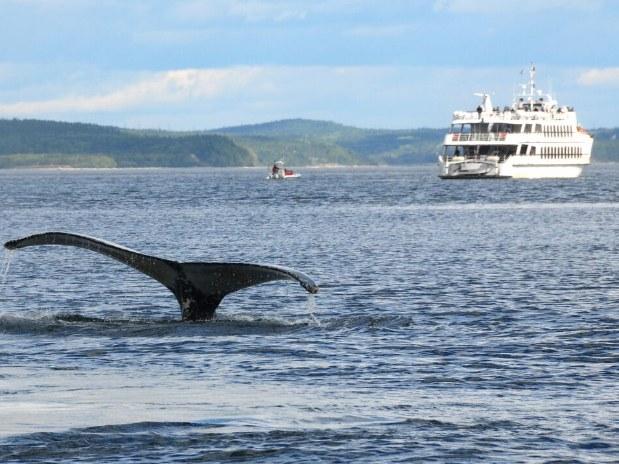 auberge-vue-fleuve-la-malbaie-Baleine