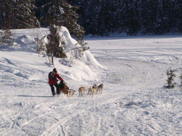 Pourvoirie du lac blanc saint alexis des monts traineau a chiens