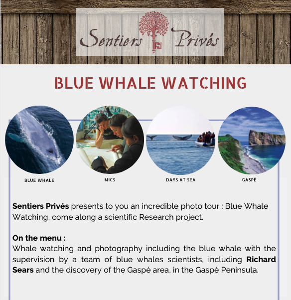 Blue Whales Watching