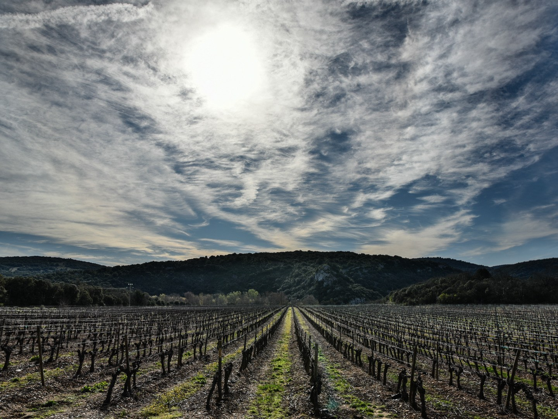 vigne-hauts-issensac