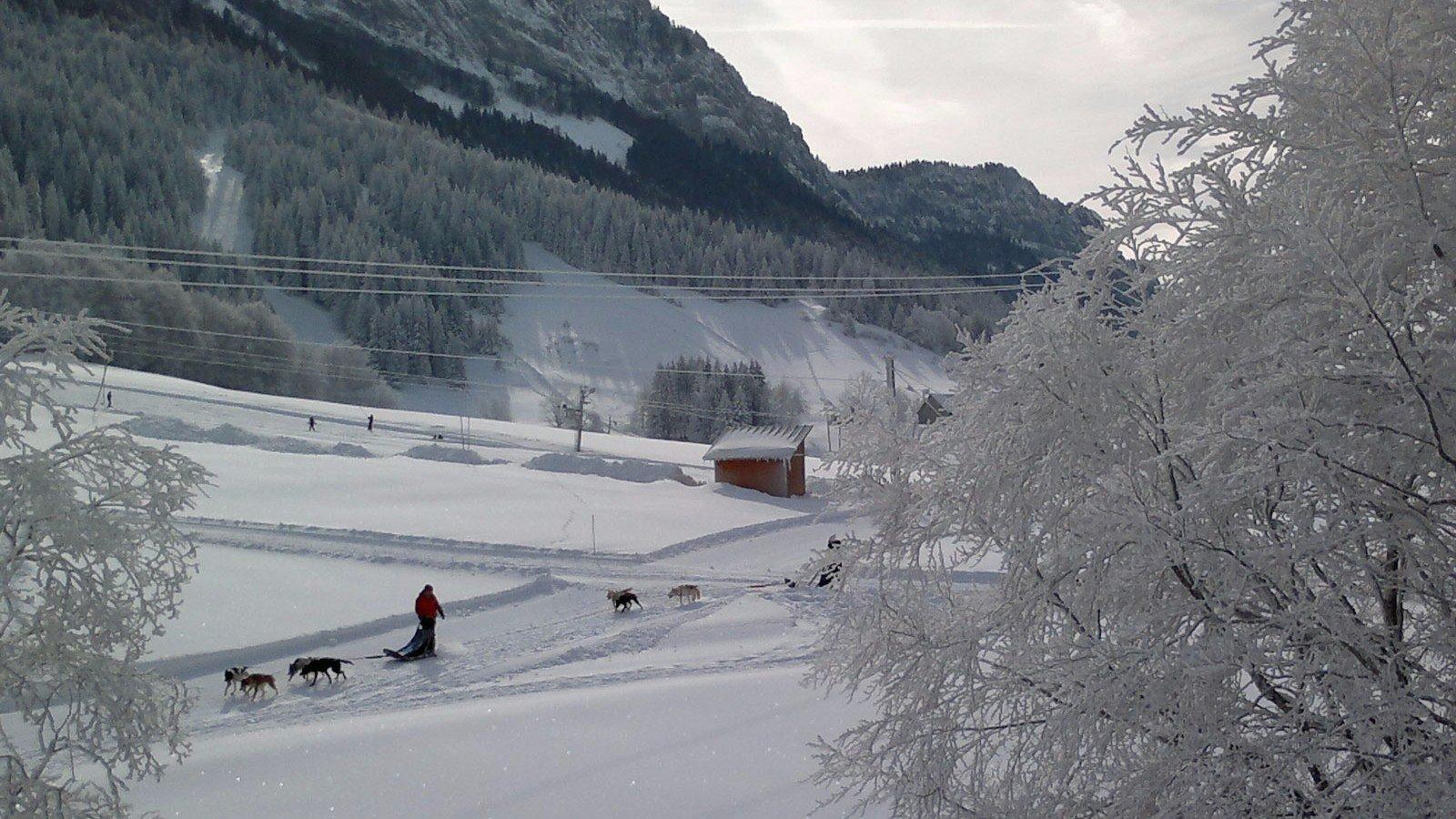 hotel-dans-le-Vercors-neige-chien-de-traineau