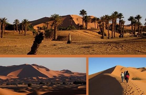 palmeral-gran duna