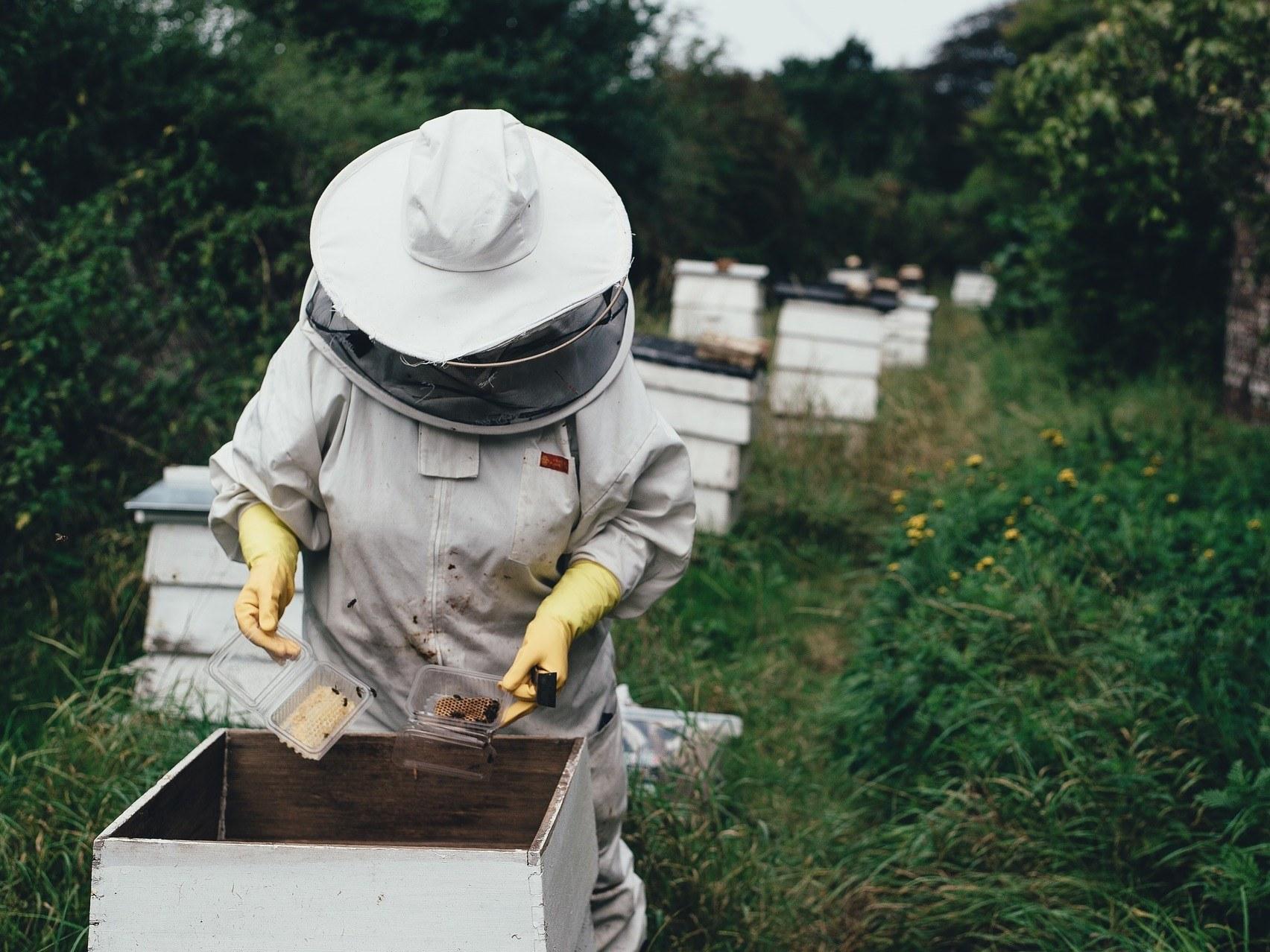 gite-hautvillers-ruche-abeille-apiculteur