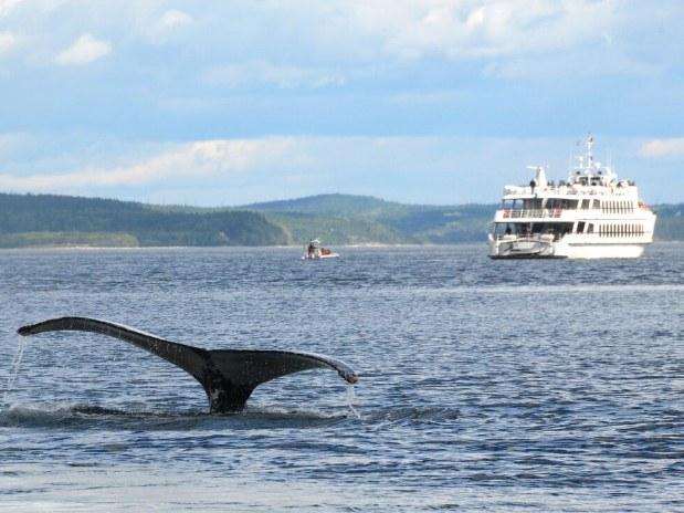 auberge-vue-fleuve-la-malbaie-Baleines