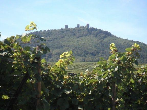 Au-bonheur-apprivoisé-Gîte-Alsace-Eguisheim-route-des-vins-Vue-Trois-Châteaux