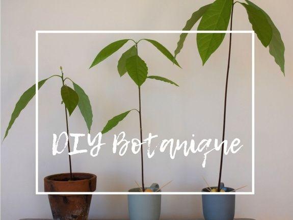 DIY Botanique