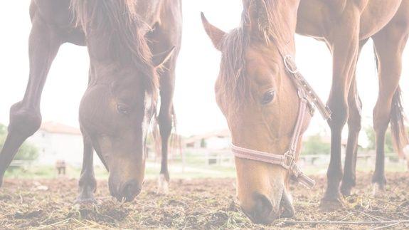 chevaux qui mangent jardinerie moustaches & crinières à béziers dans l'hérault grainerie et alimentation animale
