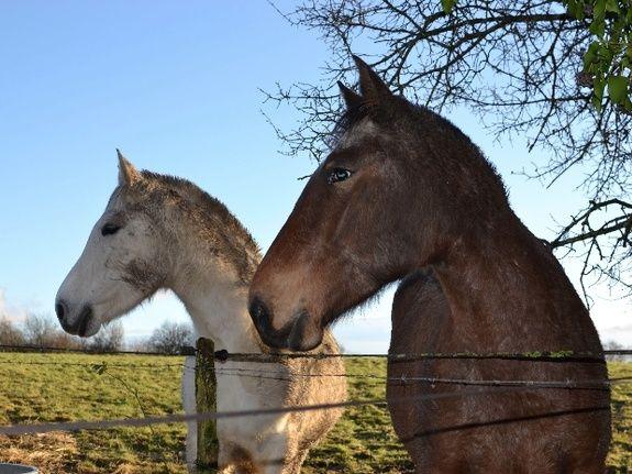 Les chevaux-chambres d'hôtes de charme-perigord-villereal-monflanquin