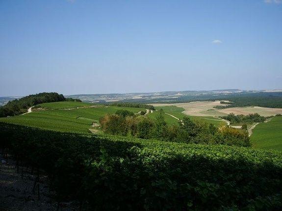 gite-champagne-baroville-la-clemenceraie-vignoble