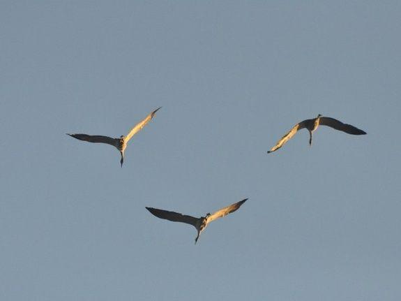 gite-lac-du-der-oiseaux