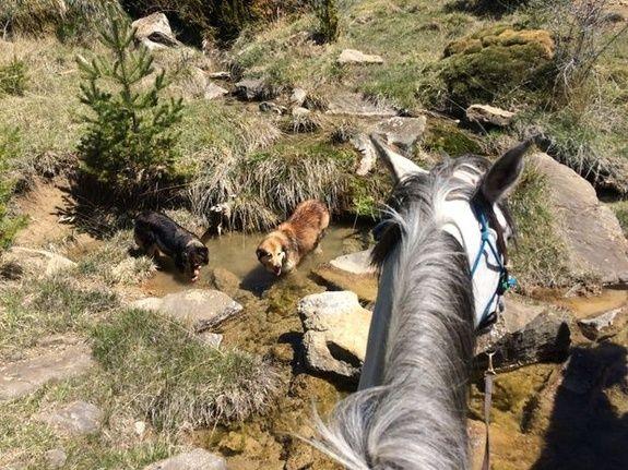 Randonnnée à cheval Nocito avec les chiens de Bertrand