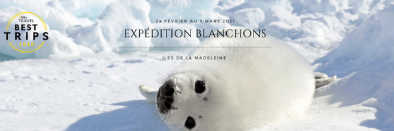 sel-pups-expedition-magdalen-island