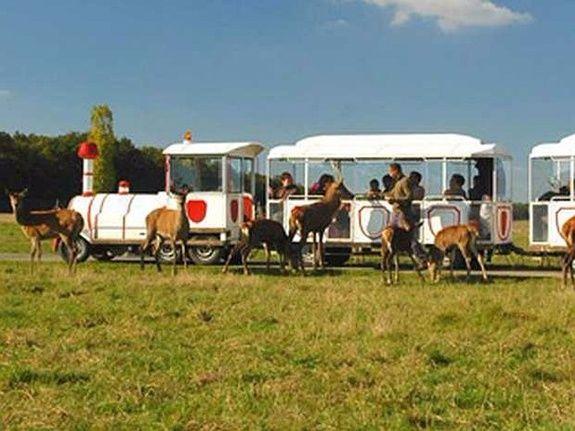 hotel-blois-centre-anne-de-bretagne-locomotive-enfants-safari-train-animaux-des-bois-nature-jeux