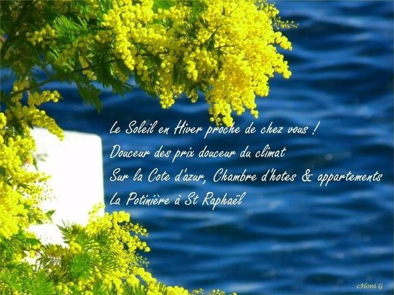 Fête du mimosa douceur des prix, douceur du climat  à La Potinière