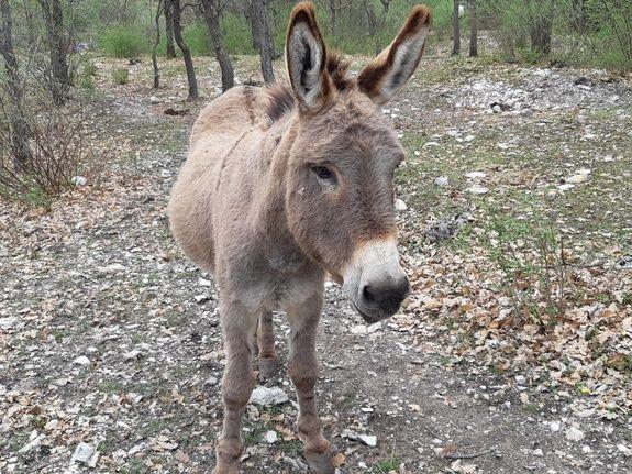 grand-gite-paca-ânes