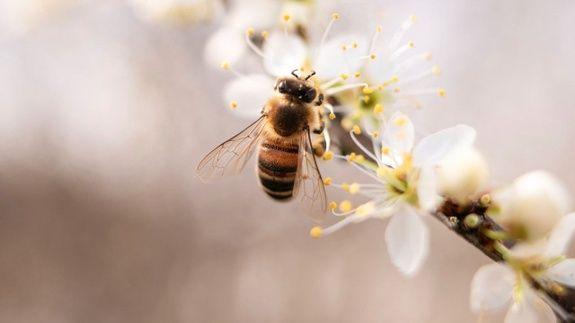 miel-artisanal-hautvillers