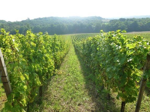 Vignobles de Montdoyen-perigord-dordogne-lot et garonne-maison d'hotes-moulin de labique