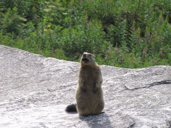 Marmotte Hotel du Solei Aussois