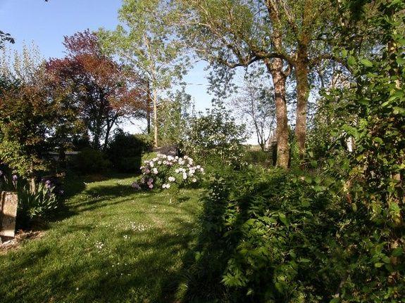 Pivoine et herbes folles