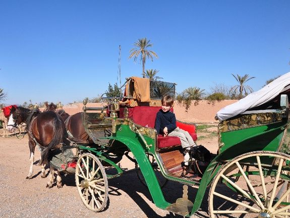 balades dans la ville en calèche - marrakech - maroc