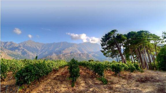 Vignoble en Corse