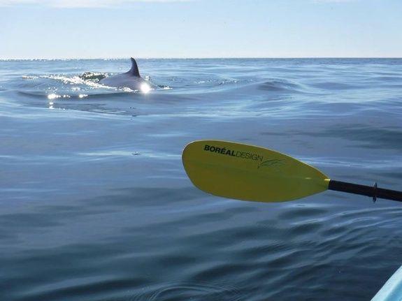 kayak cap aux os