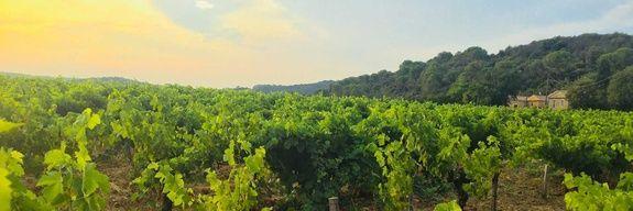 image-camping-carpentras-vaucluse-route-des-vins