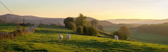 Ferracin vente directe de viande de bovin à la ferme à Soulaures